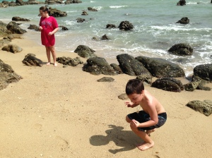 finding shells and crabs